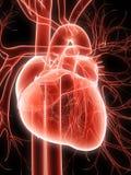 hjärtahuman Arkivfoto