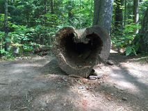 Hjärtan av naturen Royaltyfri Bild