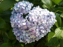 Hjärtan av trädgårdarna royaltyfri fotografi
