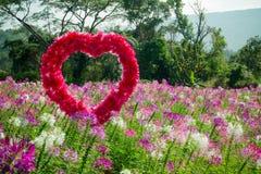 Hjärtan i blommafält Fotografering för Bildbyråer
