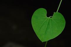 Hjärtan i natur Royaltyfri Bild