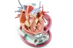 hjärtastetoskop fotografering för bildbyråer