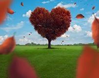 Hjärtaträd royaltyfria bilder