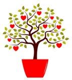 Hjärtatree i kruka Royaltyfria Foton
