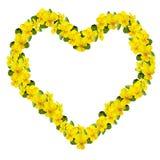 hjärtaviolet Royaltyfri Bild