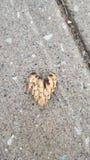 Hjärtor i natur Arkivfoto