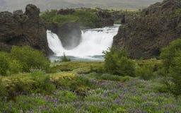 Hjalparfoss удвоило водопад в южной Исландии, с вулканическими породами, мхом и зеленым лугом с фиолетовыми цветками lupine, Стоковые Фотографии RF