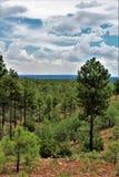 Hjort fjädrar framtidsutsikten, den Apache Sitgreaves nationalskogen, Navajo County, Arizona, Förenta staterna royaltyfri foto
