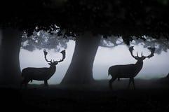 hjortar Arkivfoton