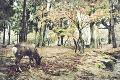 Hjortar av Nara Park, Japan Digital Art Impasto Oil Painting Abstr royaltyfri bild