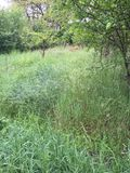 Hjortar i avståndet Royaltyfri Fotografi