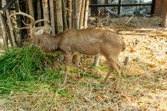 Hjortar i en bur och en härlig bakgrund fotografering för bildbyråer
