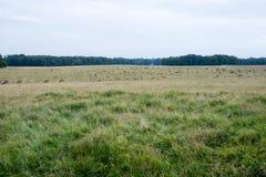 Hjortar i Klampenborg Arkivbild