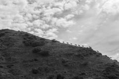 Hjortar i nationalparken av Picos de Europa, Cantabria, Spanien royaltyfria bilder