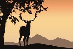 Hjortar med horn på kronhjortanseende under ett lövfällande träd i ett berg l stock illustrationer
