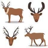 Hjortar och deras huvud Royaltyfri Fotografi
