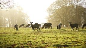 Hjortar parkerar royaltyfri bild