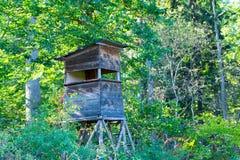 Hjortar står i den naturliga reserven Schoenbuch som är mest forrest i Tyskland royaltyfria bilder