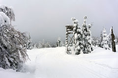 Hjortar står - trädställningen - utkiktornet i berg Arkivfoto