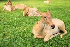 hjorteld s fotografering för bildbyråer