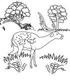 Hjortfärgläggningsida vektor illustrationer