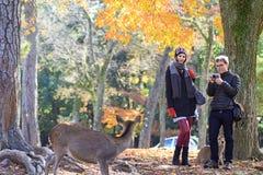 hjortfall japan nara royaltyfri foto
