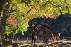 hjortfall japan nara royaltyfria bilder