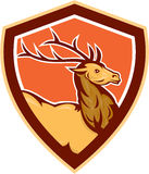 Hjortfullvuxen hankronhjort Buck Head Shield Retro Royaltyfri Foto