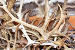 Hjorthorn Arkivfoton
