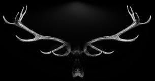 Hjorthorn på kronhjort 3d isolerade det svarta vita bakgrundsdjuret Arkivbild