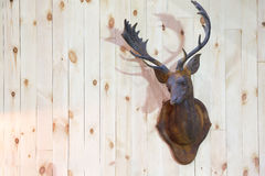 Hjorthornhorn på kronhjort Fotografering för Bildbyråer