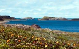 Hjortroner på segla utmed kusten av det Barents havet Royaltyfria Foton