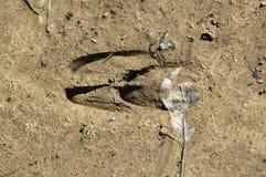 Hjortspår Arkivfoto