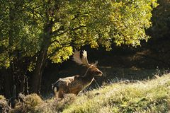 hjortträdor Royaltyfri Bild