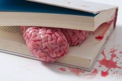 Hjärnbegrepp av studien in i en bok Royaltyfria Foton