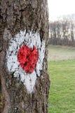Hjärta som dras i trädet Royaltyfria Bilder