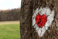 Hjärta som dras i trädet Royaltyfri Foto