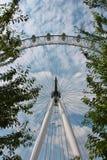 Hjul för London ögonferris till och med träd Arkivbild