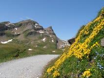 Hkingpath till Bachalpsee Schweitz Arkivbild