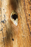 Hål i trä Arkivfoton