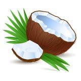 Hälfte eine Kokosnuss Stockfoto