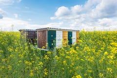 Hölzerne Bienenstöcke auf Ölsaatwiese Stockbilder