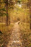 Hölzerne Einstiegweg-Weisenbahn im Herbstwald Lizenzfreie Stockfotografie