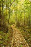 Hölzerne Einstiegweg-Weisenbahn im Herbstwald Lizenzfreie Stockfotos