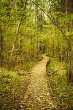 Hölzerne Einstiegweg-Weisenbahn im Herbstwald Stockfotografie