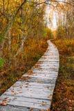Hölzerne Einstiegweg-Weisenbahn im Herbstwald nahe Sumpfsumpf Stockfotos