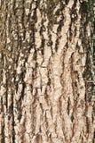 Hölzerner Außenseitehintergrund der Barke, geknackt, Schmutz Stockfoto