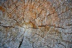 Hölzerner Baum-Ring-Hintergrund Jährliche Wachstumsringe auf einem Klotz Stockbilder