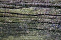 Hölzerner Hintergrund des alten Zerfalls umfasst im grünen Moos und in der Form Stockfotos