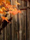 Hölzerner Hintergrund mit Herbstblättern Stockbilder